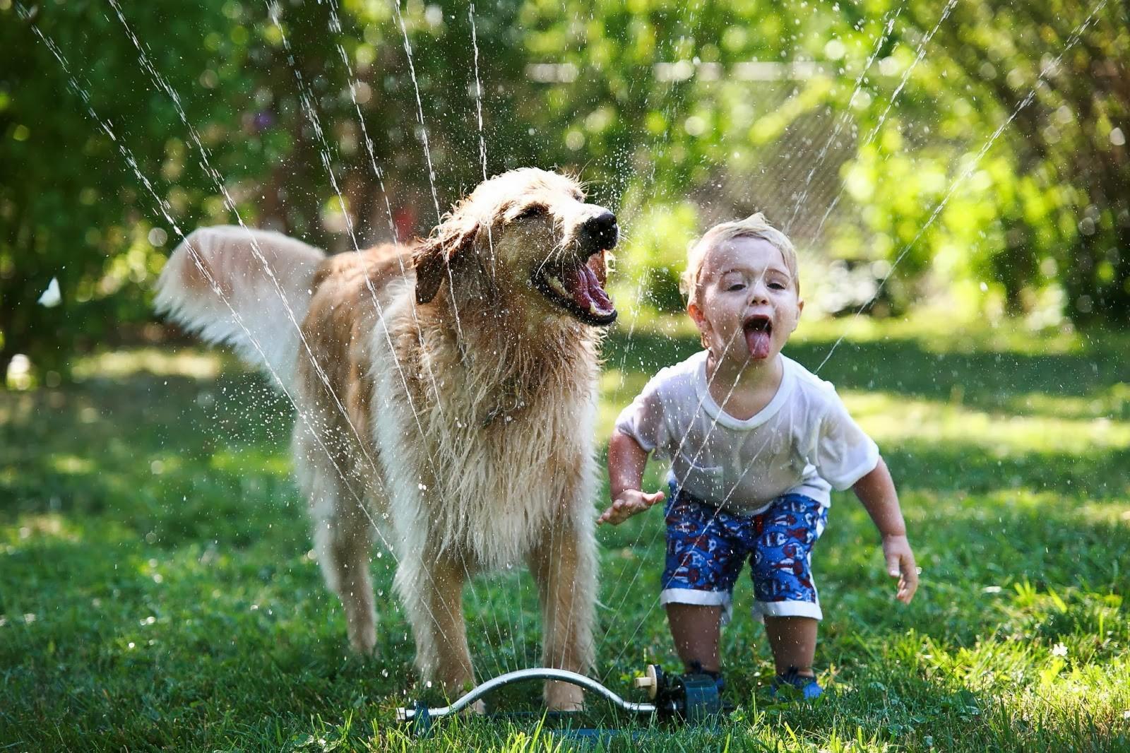 Афон греция, дети животные смешные картинки